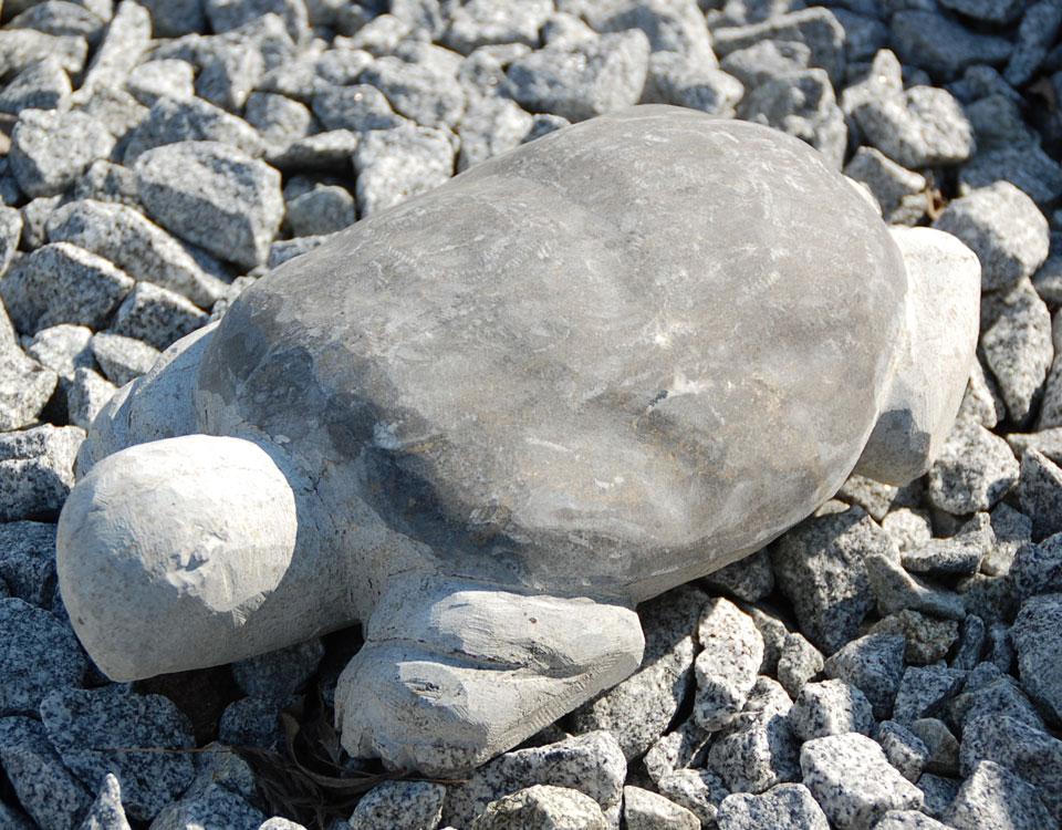 Schildkröte, Basalt